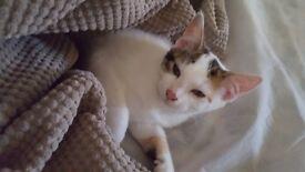 4 month old kitten