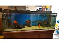6ft Fish Aquarium Tank - Complete Setup