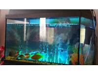 Fish + 60l Tank with FREE accessories - £65