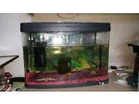 Fish tank, RRP £100+. £10 If gone today