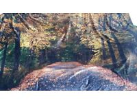 9 Quality Assortment of Cloth/Silk Backdrops all new unused except 1