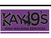 Kay9 dog walking services