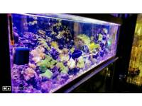 Marine Sale clearance on 19th Nov-Corals and Fish