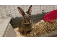Grey Rabbit with all stuff, Cage and Homemade Run