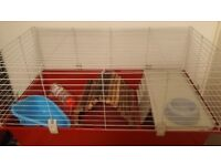 large rabbit guinea pig cage accessories