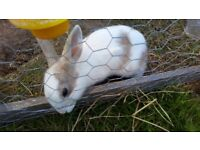 Young rabbits for sale- various ages