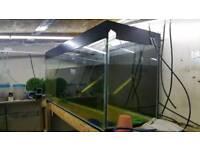 4ft bare fish tank