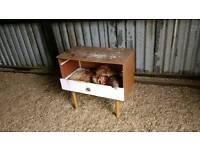 Shamo chickens hens
