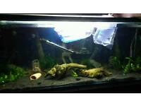 Full set up 4ft fish tank