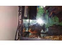 Fish tank and piranha