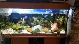 Juwel 180 fish tank. Includes everything!