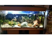 Juwel 180 fish tank. Includes everything!