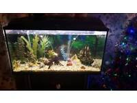 200 litre aquael tropical fish tank in good used condition