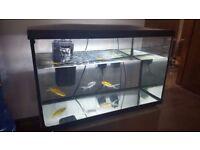 Goldfishes with 75 litre Aquarium in Allerton Bradford