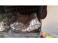 Small dog crate vgc 2 doors
