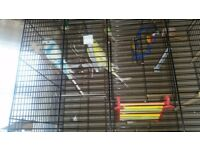 Budgies and cage 1 yellow and 1 blue budgie with cage and accessories