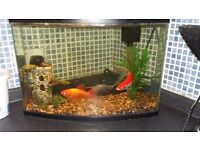2 Gold fishes, tank, fish food
