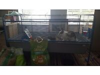 2 Lion Head Rabbits and Large indoor Cage