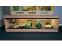 Snake and full vivarium setup