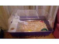 Two Baby Russian dwarf hamsters with cage
