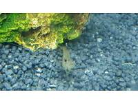Free Guppies +whisker shrimp (maybe) and some other bits