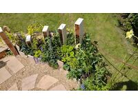 Gardener Available (Diploma, Experience & CIH Member)