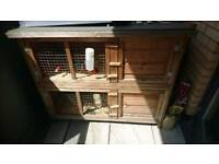 2 x guinea-pigs and double hutch