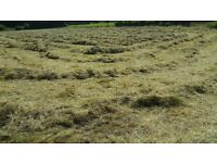 Exceptionally high quality meadow hay bales