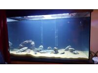 Large Aquarium - 620l