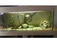Fish tank. filter and fish