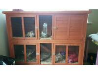 2 x female guinea pigs approx 8 months old and hutches