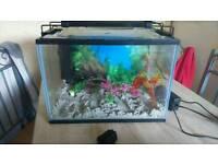 Small tank and fish