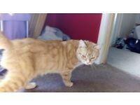 Female ginger cat