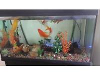 Large fish tank with stand, large 7 fish and filter