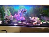 A large 5 foot fish tank