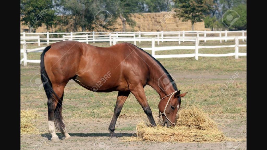 Horse hay Haylage