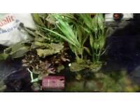Fish tank decoration