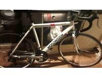 woodworm road bike
