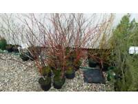 Plants shrubs trees etc. Stock clearance