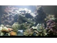 SOLD PENDING COLLECTION Live rock for marine tank