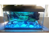 Fish Tank, Aquarium for sale. Ready to go!