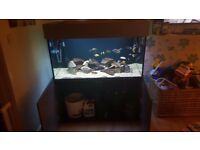 4x2x2 nd aquatics fish tank