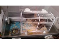 Russian dwarf hamster with cage and accessories