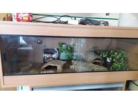 4ft vivarium with equipment