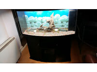 JUWEL VISION BOW FRONTED 260 LITER FISH TANK AND STAND FOR SALE,FULL SET UP
