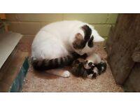 Lovely kittens available