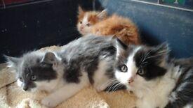 Sweet little kitten looking for home,