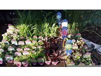 Pond plant's