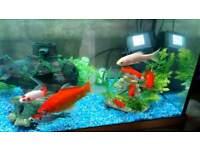 120 ltr fish tank