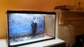 38 litres fish tank